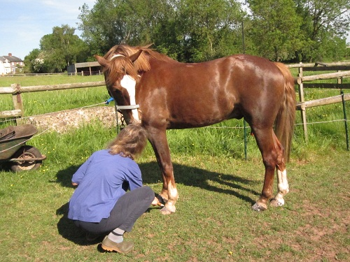Equine dating sites