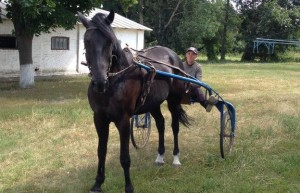 Dibrivsky horse breeding farm