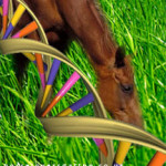 Know your Horse even better as Horse genome is unlocked