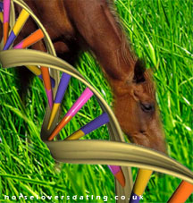 horse-genome