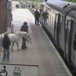 Pony owner tries to get on the train with his pony