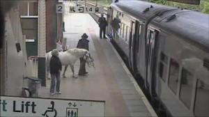 Pony on platform