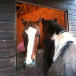 Equine biology – a simple, helpful explanation about the basics of a cell