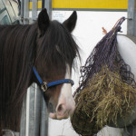 Buying a Horse? Here are some things you should consider beforehand