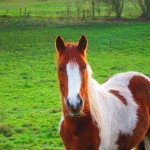 Horse Health – Plants Your Horse Must Avoid