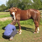 Super Quick Horse Grooming Techniques