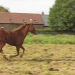 Summer Tips for a Happier Horse